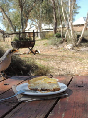 Enjoy some cheesecake and one of our local bird visitors at the Trail Station Wi-Fi Cafe at the Alice Springs Telegraph Station